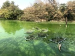 Floating Island 20